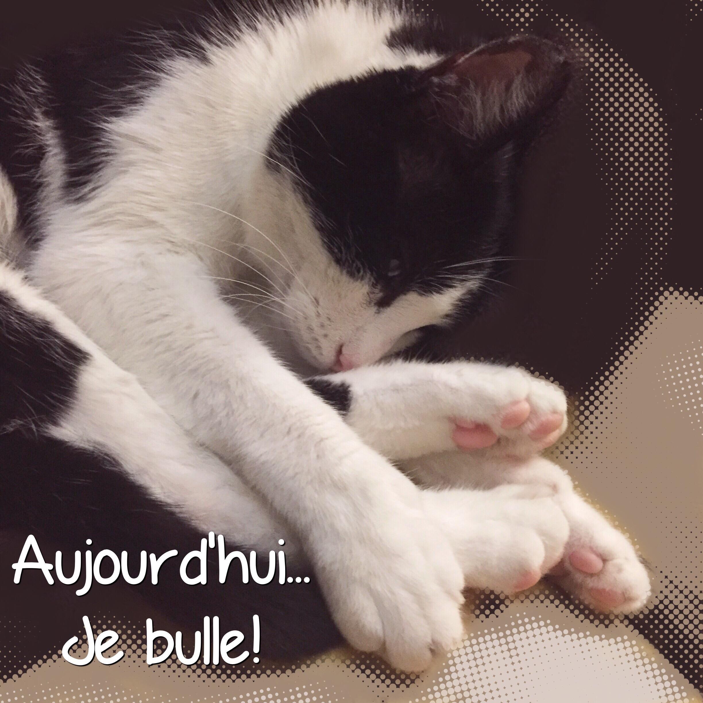"""Résultat de recherche d'images pour """"images bon dimanche chats"""""""