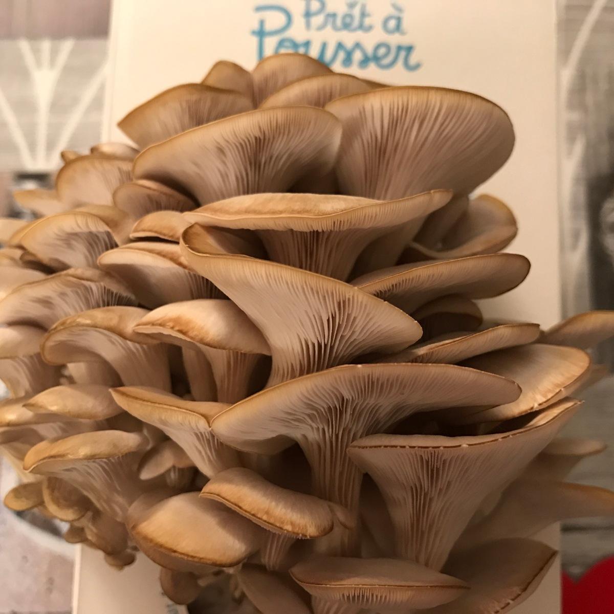 Des champignons la maison avec pr t pousser le beautymag senior - Faire pousser des champignons de paris ...